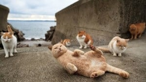 Tashirojima, l'île aux chats au Japon