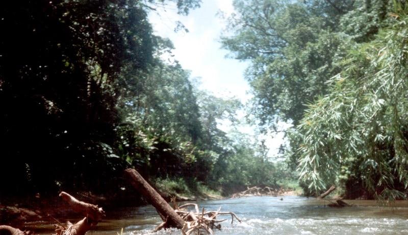 Réserve de la biosphère du Rio Platano, en Honduras