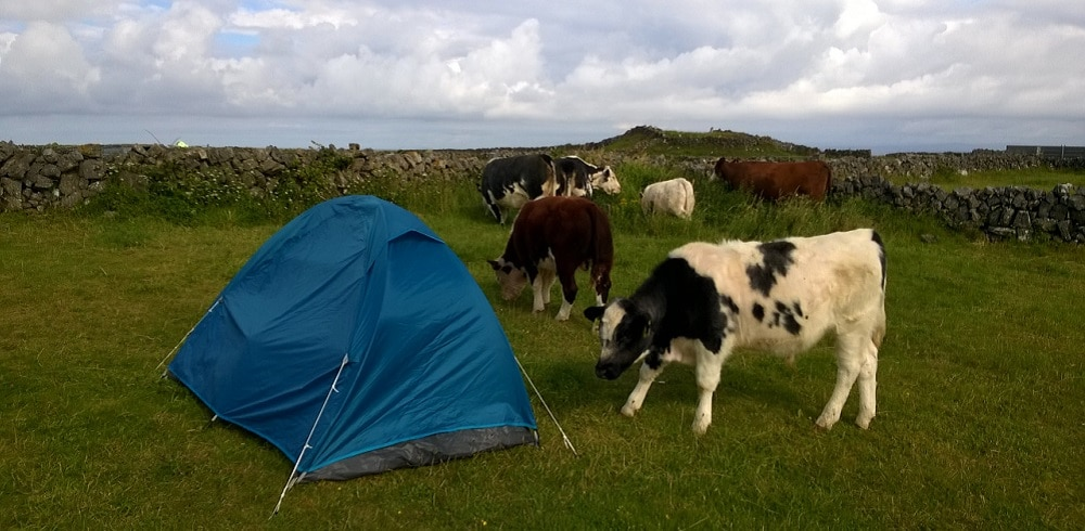 Alice Baude, Tente, Vache, Irlande