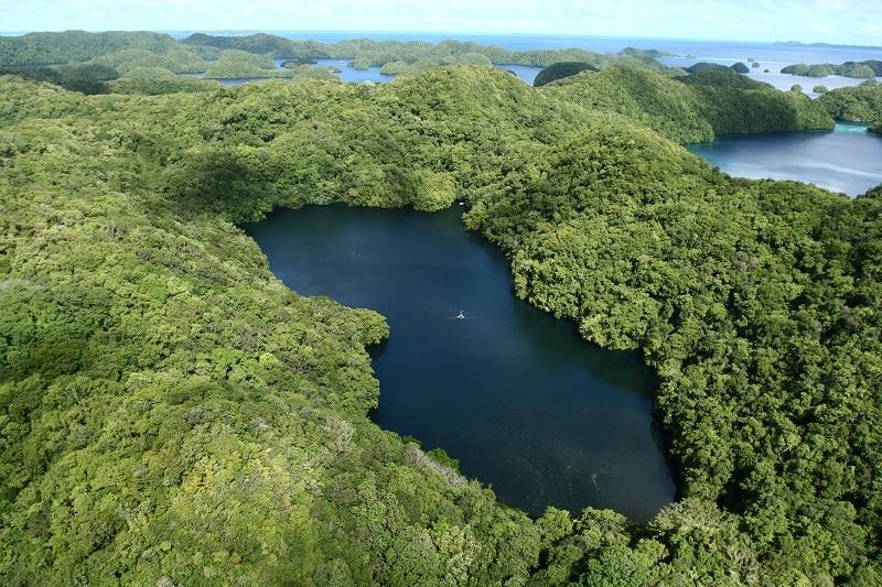 Lac aux méduses à Palaos