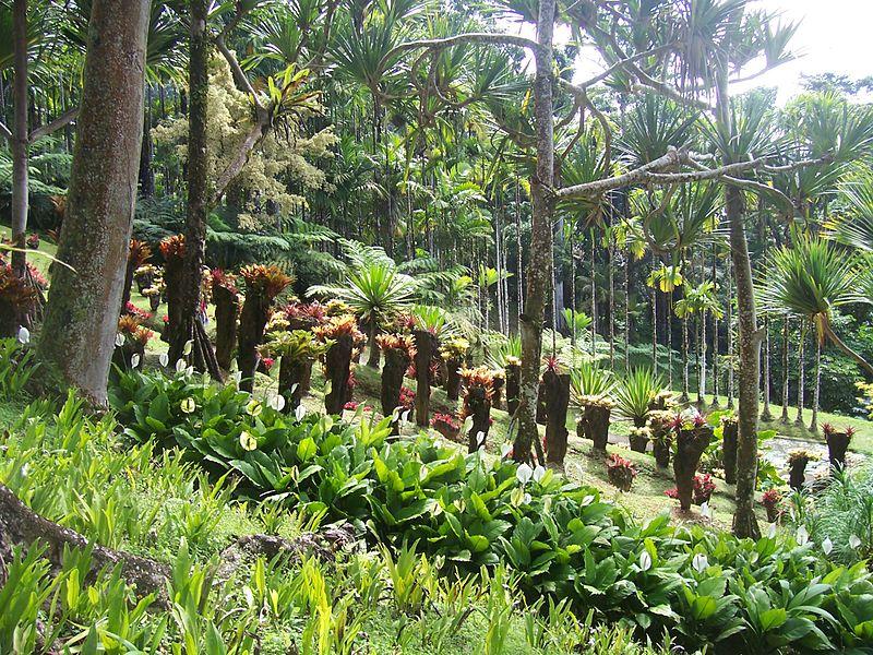 Jardin Balata en Martinique