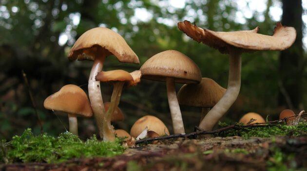 uMap : dénichez les meilleurs coins de cueillette de champignons