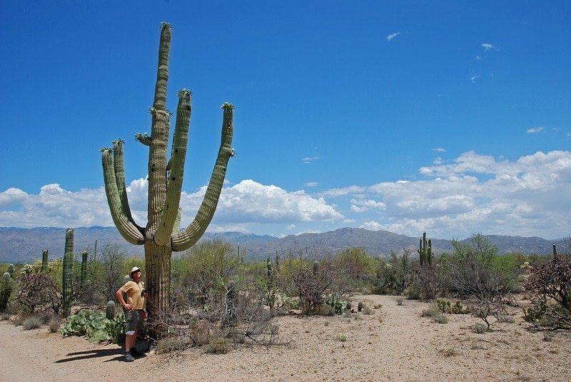 Parc national de Saguaro, Arizona