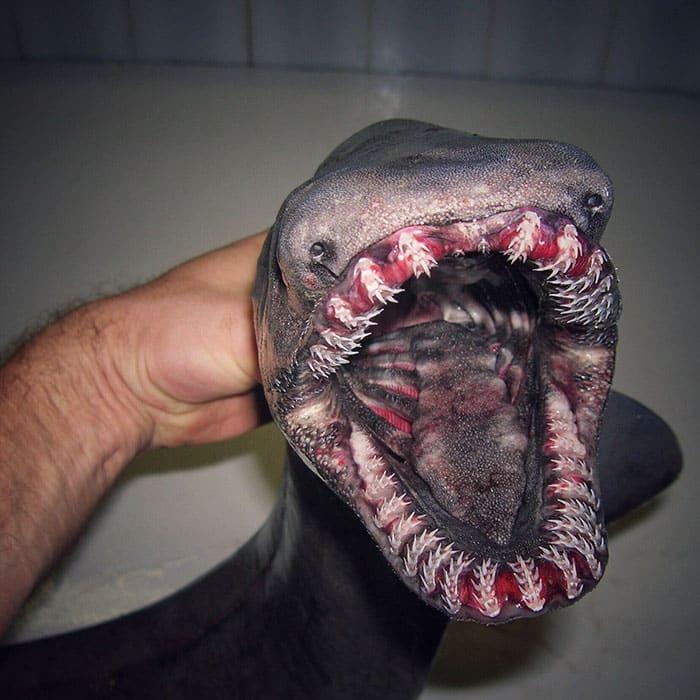 Un monstre marin en Russie