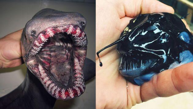Un pêcheur russe photographie les fascinants monstres marins qu'il remonte à la surface