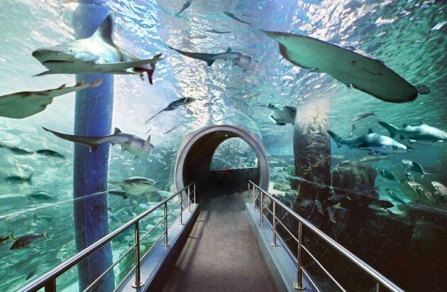 Réservation de billets pour le Sea Life Aquarium
