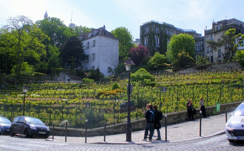 Vineyards of Montmartre, Paris