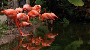 Flamingos Gardens Miami