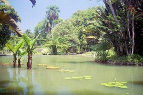 Réservation de billets pour le jardin botanique de Rio de Janeiro