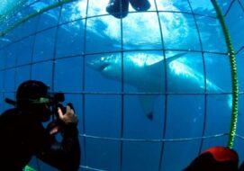 Plongée dans une cage avec un grand requin blanc au Cap
