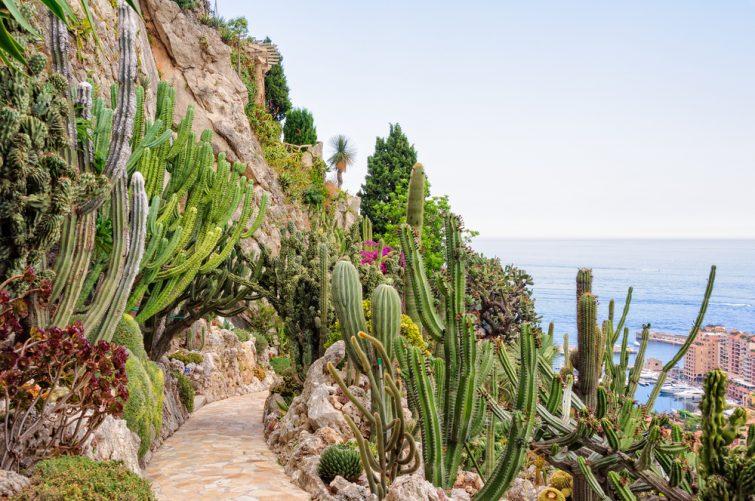 Visiter le Jardin Exotique de Monaco
