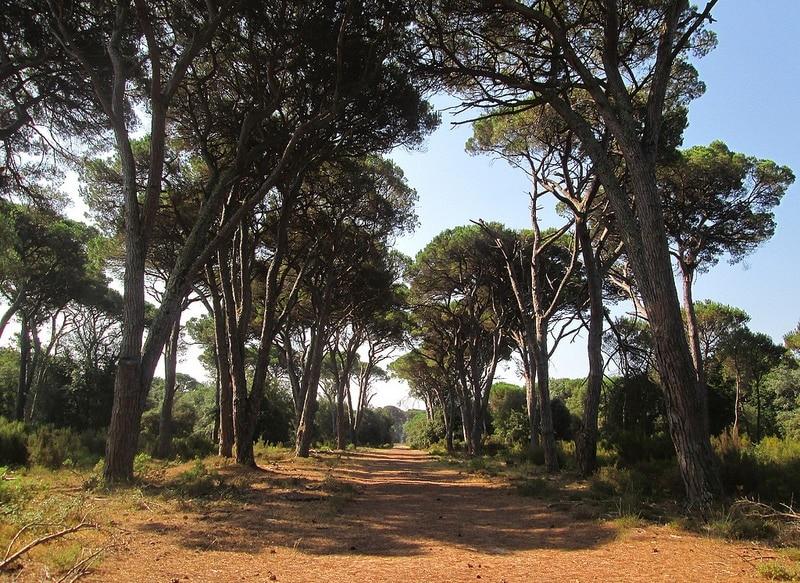 Parc San Rossore, Pise