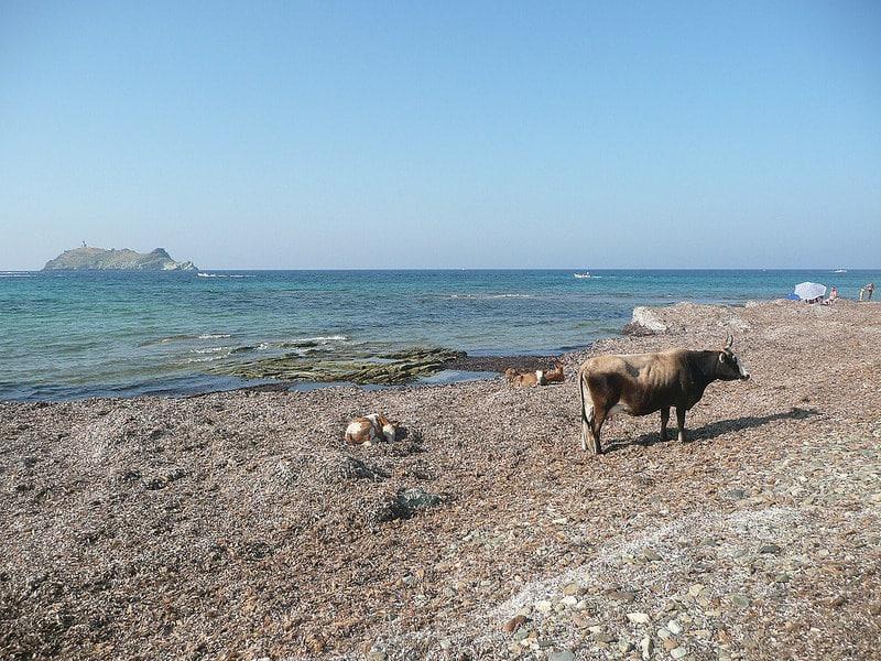 Sentier des Douaniers, Barcaggio, Corse