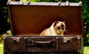 6 conseils pour faire sa valise de façon efficace