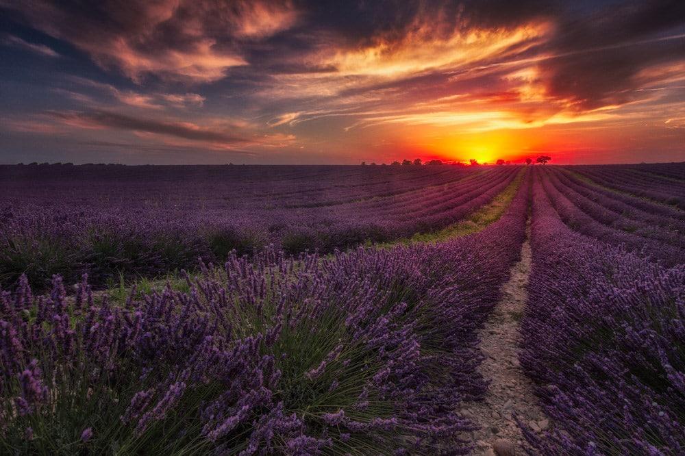 Visiter la France, Plateau de Valensole