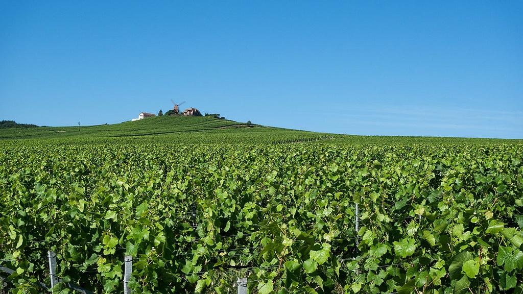 Visiter la France, Vignoble de Champagne