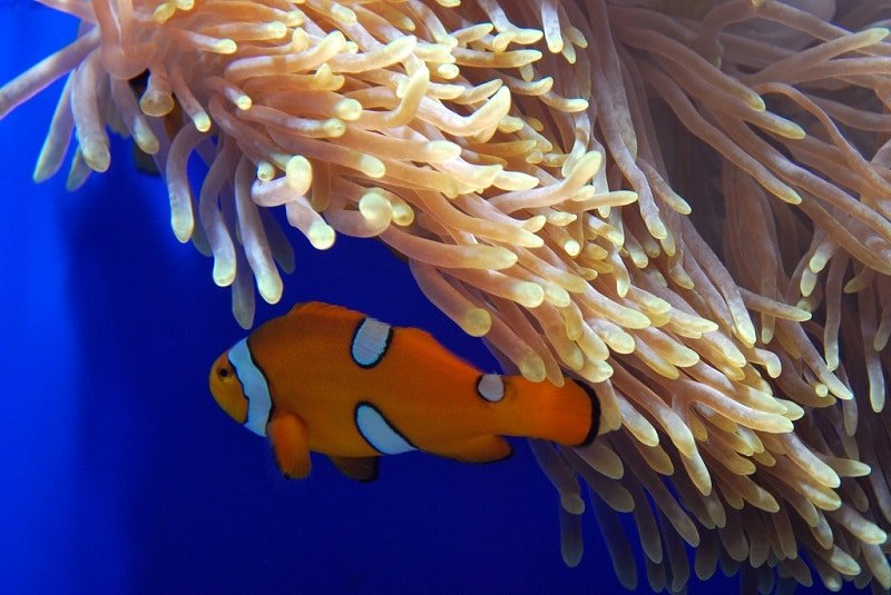 Aquarium de Phuket