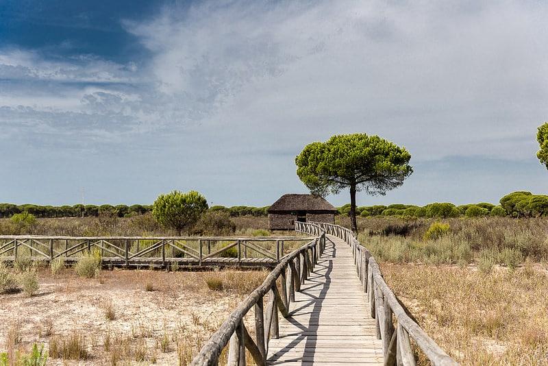 Parc National de Doñana, visiter l'Andalousie