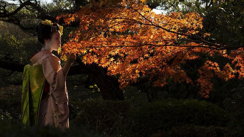 Culture japonaise, geishas hommes