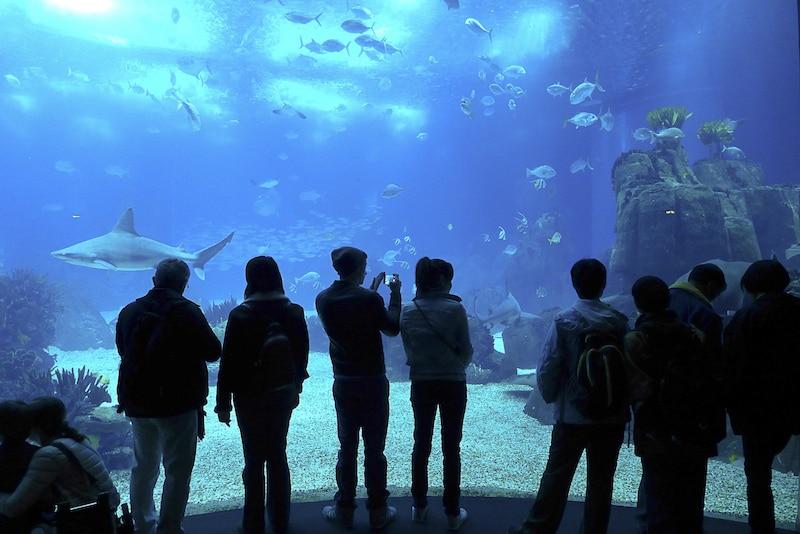 Visiter L'Aquarium de Lisbonne 1