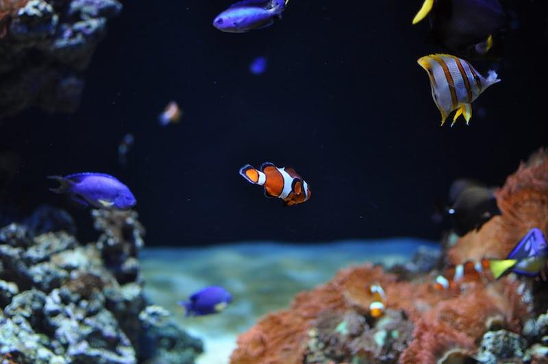 Visiter L'Aquarium de Lisbonne 2