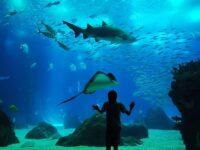 Visiter L'Aquarium de Lisbonne