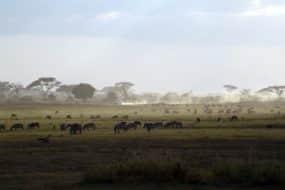 1 semaine Safari au Kenya à partir de 565€ Vol+Hôtel à la rentrée !