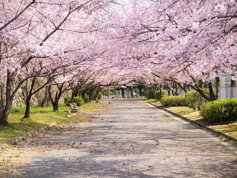 Loger à Fukuoka, Daimyo