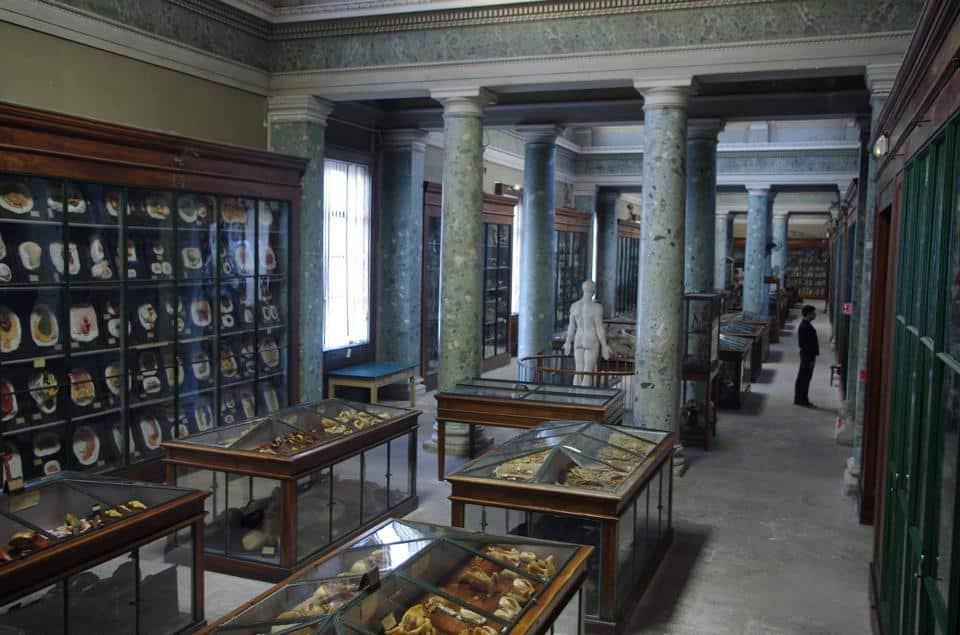 Musée insolite: musée anatomie Montpellier