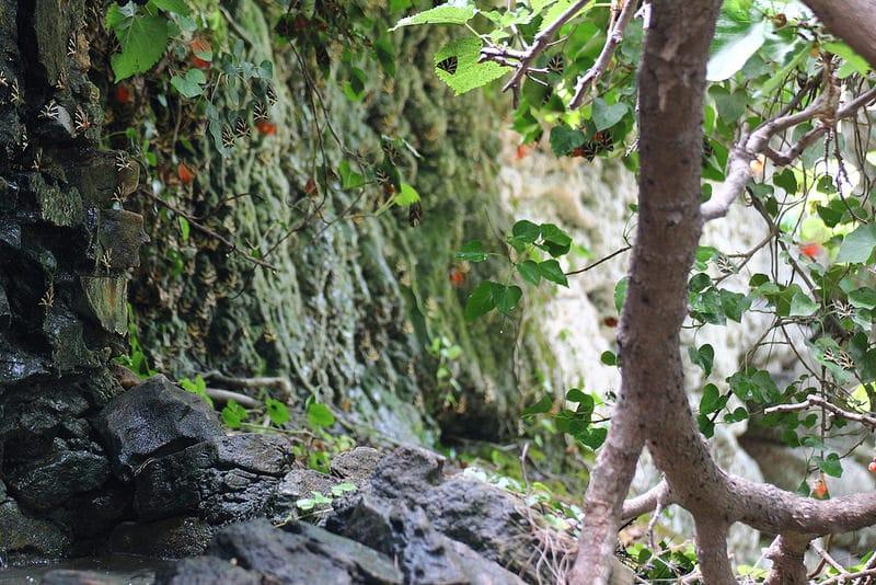 Vallée des papillons, Paros