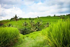 Vacances à Bali: 2 semaines à partir de 530€ par personne fin Septembre (Vols A/R+Hôtel)