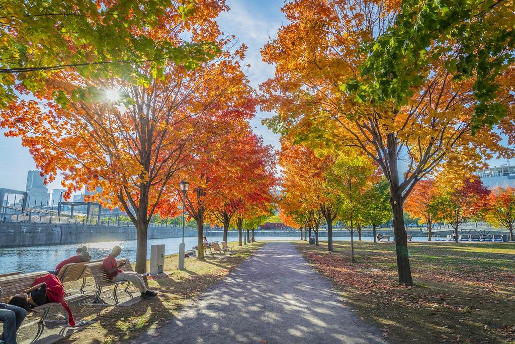 Séjour de 8 jours à Montréal pour la Toussaint à 507€ par personne (Vols A/R+Hébergement)