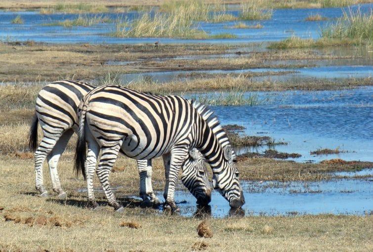 Botswana, voyager après l'été