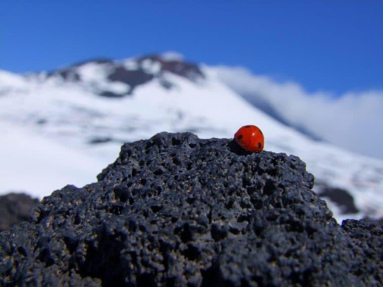 Coccinelle, randonnée sur l'Etna