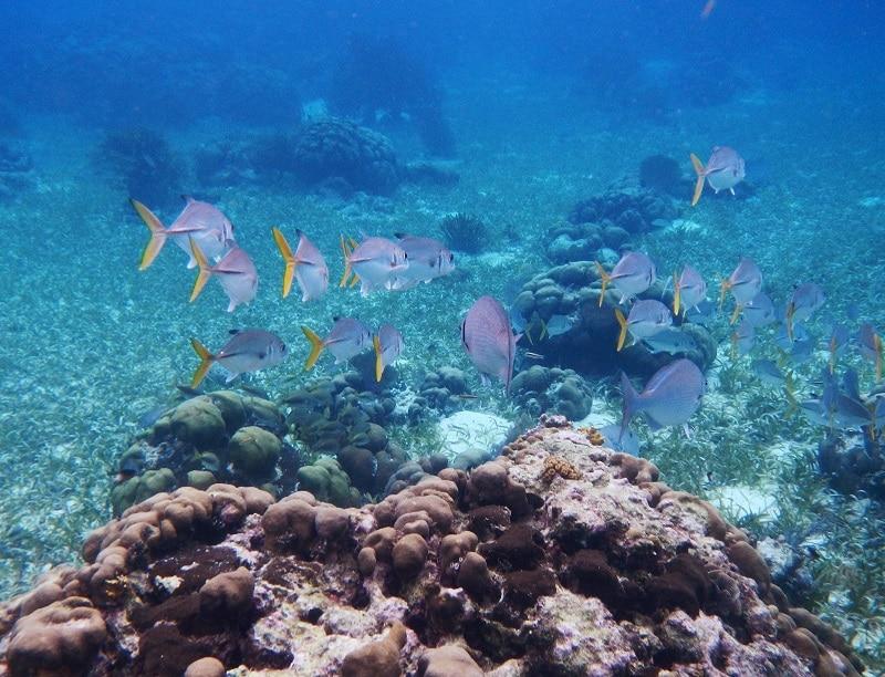 La réserve marine de Hol Chan au Belize