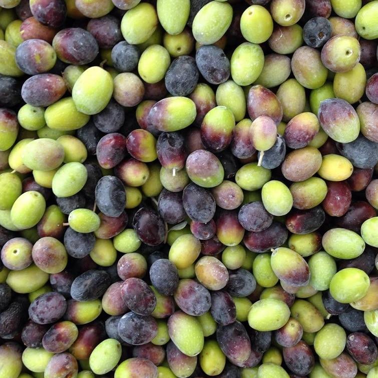 Huile d'olive, spécialité corse