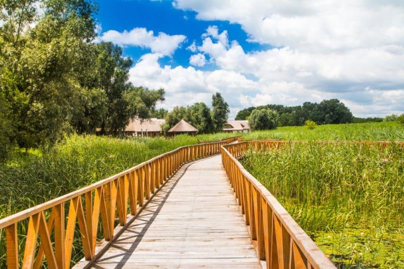 Parc national de Kopacki Rit, Croatie