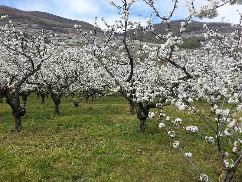 Visiter Estrémadure, vallée de la Jerte