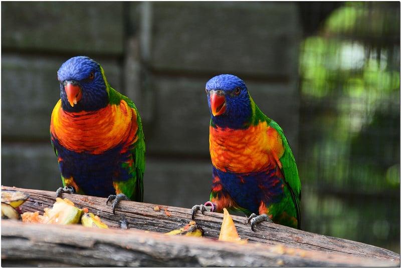 Zoo de Guyane