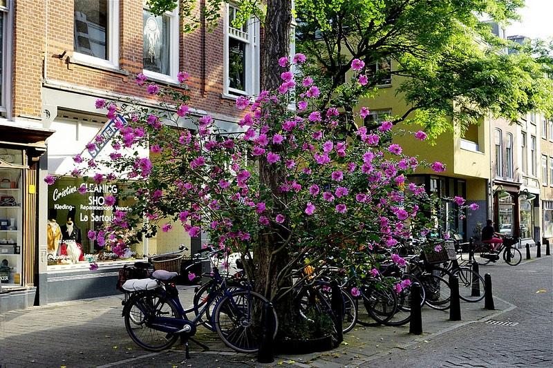 Quartier Zeeheldenkwartier, La Haye