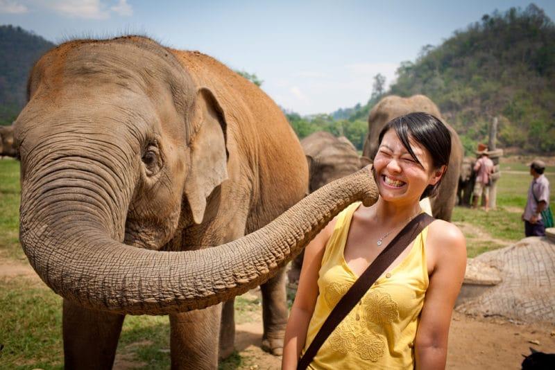 Activité éléphant, Chiang Mai
