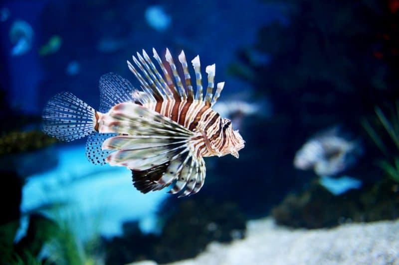 Aquarium, Biarritz
