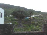 Circuit de 5 heures au nord de Tenerife