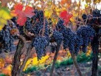 Expérience Concha y Toro vin