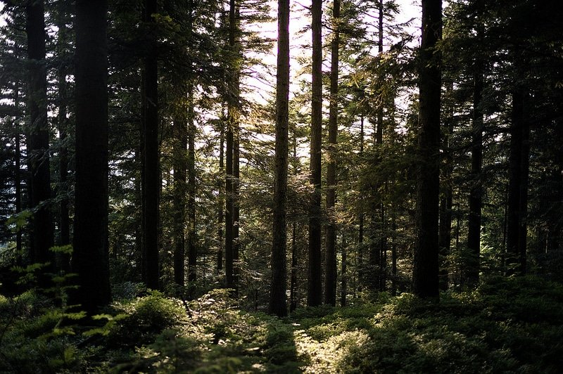 Forêt Noire, Baden-baden