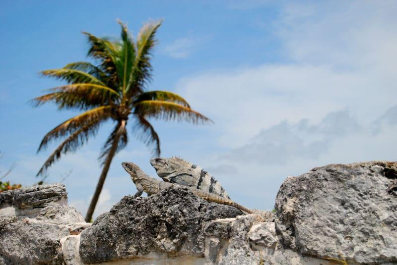 El Rey, Cancún
