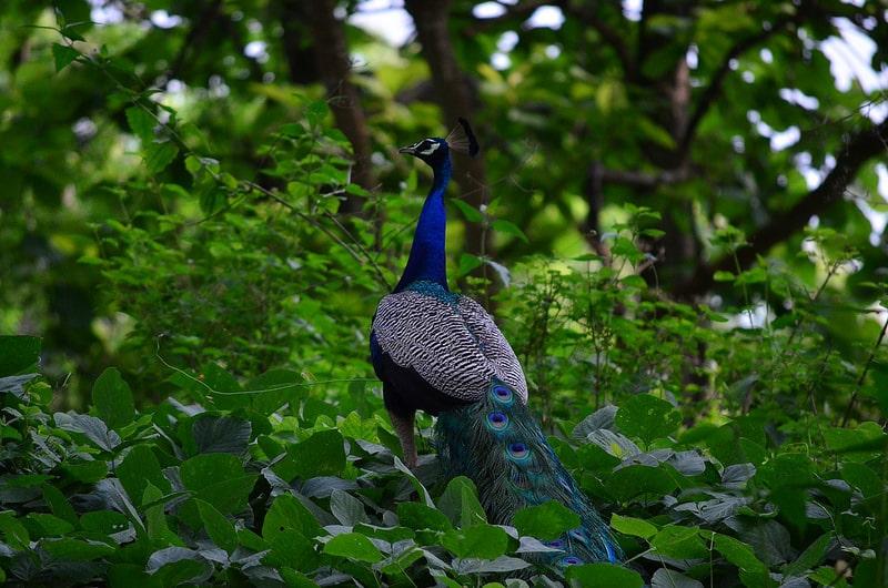 Parc National Kasu Brahmananda Reddy, Hyderabad