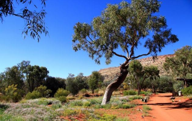 Dans quel quartier loger à Alice Springs ?