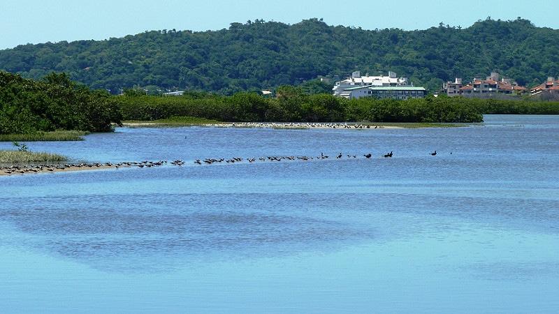 Plage Ponta Das Canas, Florianópolis