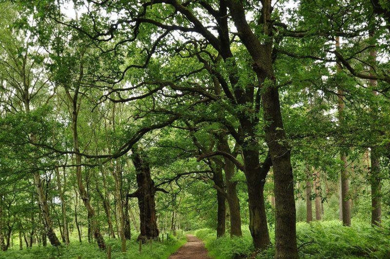 Forêt de Sherwood, Nottingham
